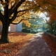 Concrete pathway through autumn trees
