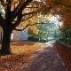 Concrete pathway through autumn trees at Denison University